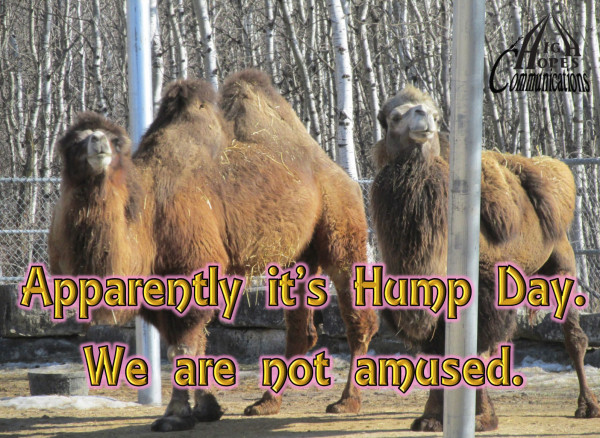 Apparently it's Hump Day.   We are not amused.