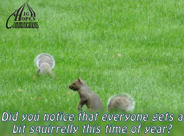 Did you notice that everyone gets a bit squirrelly this time of year?