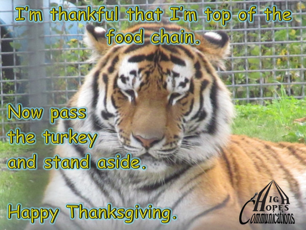 I'm thankful that I'm top of the food chain. Now pass the turkey and stand aside.