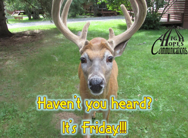 Haven't you heard? It's Friday!!!
