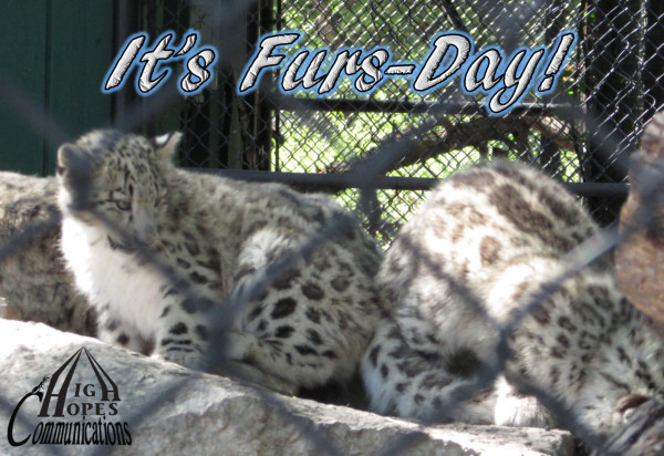 It's Furs-Day!
